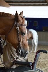 Para Reining Camp  - Rollstuhl und Pferd