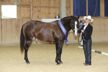 Appaloosa-3-Year-Old-Stallion-Sarah-Simon-BOEMIL-Twin-Decalog