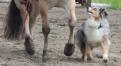 News_Horse&Dog_Trail