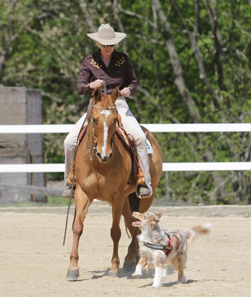Horse-&-Dog-Trail_Kunkel