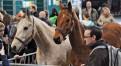 News_Pferd-Bodensee