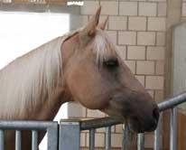 Pferd-ans-Futter
